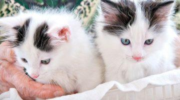 Болезни, которые могут нам «подарить» домашние животные